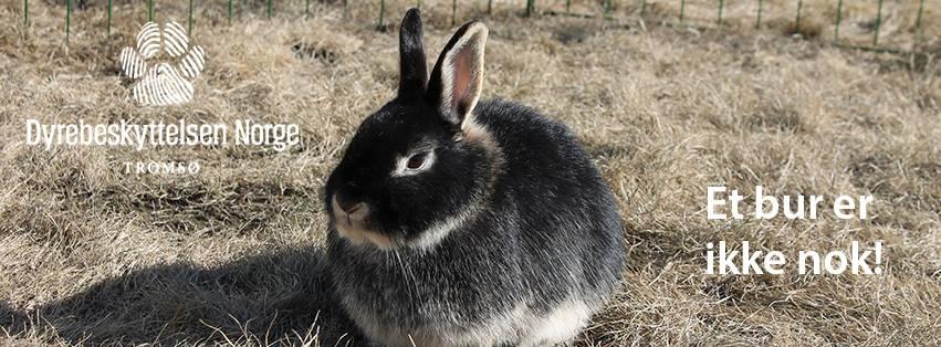 kaninforedrag