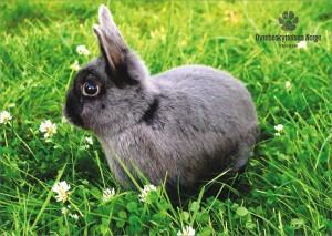 kanin-kalender