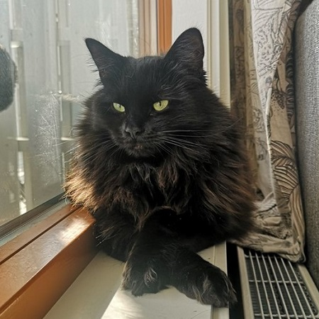 kattunger tromsø